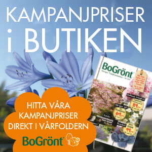 bograntvar2015_webb_4